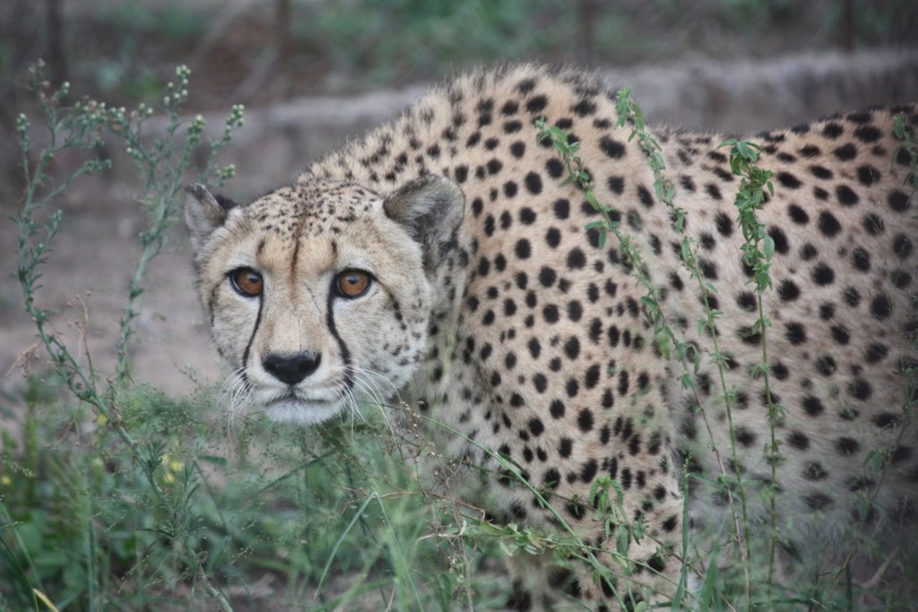 Support Martin our Cheetah
