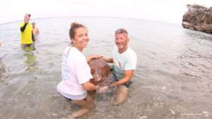 Release of a recued turtle