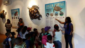 Sea turtle exposition at Landhuis Savonet