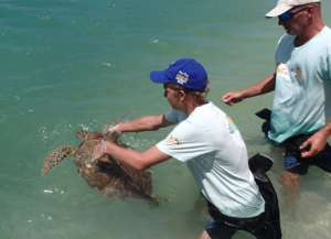 Ard and Arjan releasing a turtle