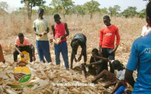 School Farms in Savelugu, Northern region