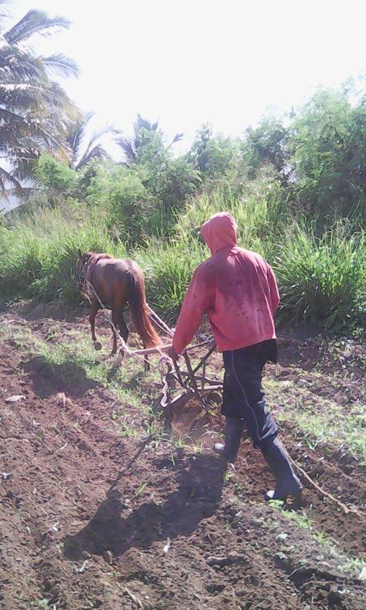 Creating Jobs for Vulnerable Rural Women