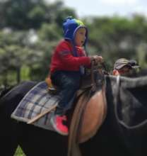 small child riding a big horse without fear