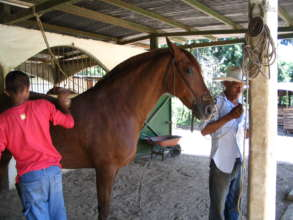 Jacaranda our first horse  owned by Don Alvaro Rey