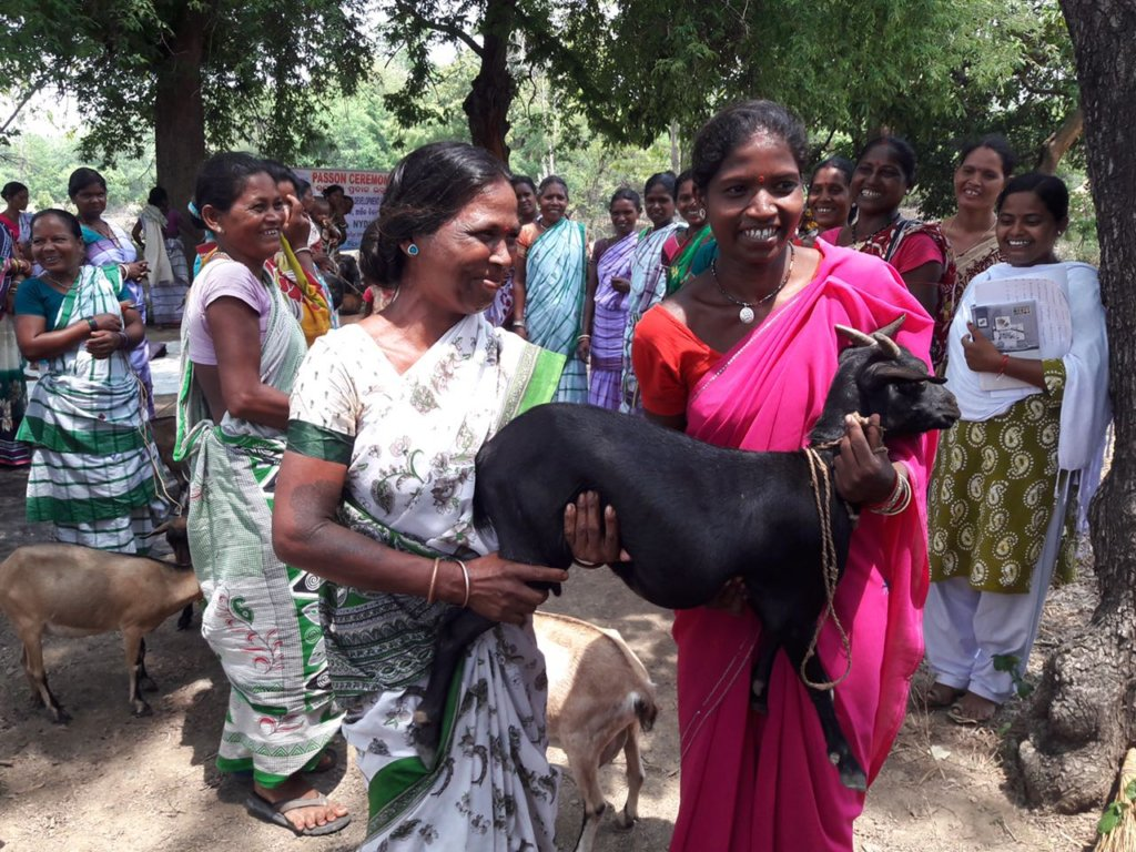 Livestock Support for 500 Tribal Families in India