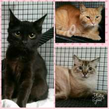 Displaced cats from Rockport, TX