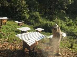 Beekeeper and beehives