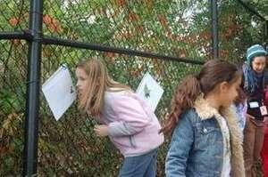 Healey School Garden