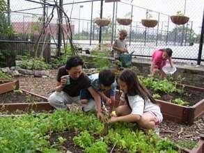 Harvesting from the garden