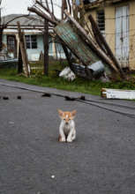 Animals had to be left on Barbuda - Cat on street