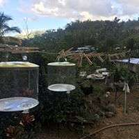 Solar lamps were provided to Adjuntas residents