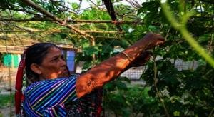 Rabiya works in her home garden