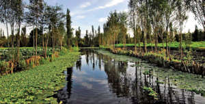 Canales of Xochimilco