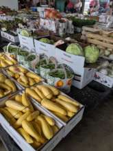 Summer squash and other produce on the CPA floor