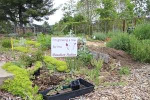 Grow a Row at CFI Community Gardens