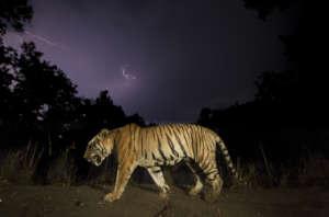 naturepl.com / Yashpal Rathore / WWF