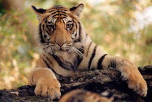 Staffan Widstrand / WWF
