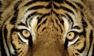 Martin Harvey / WWF