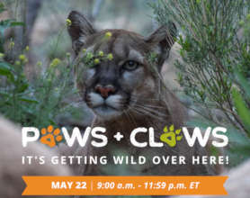 Paws+Claws Matching Gift Campaign
