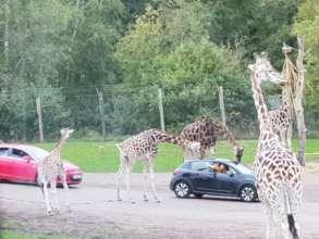 At the Safari Trip