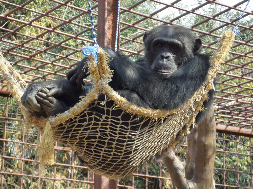 Protecting the Escape Artists at Chimfunshi