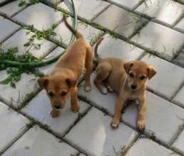 Two rescue pups at their foster home