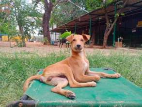 Rescue Pet Jaanu Fully Recovered