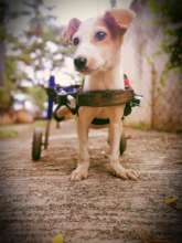 Pengu Gets Her Walkin' Wheels