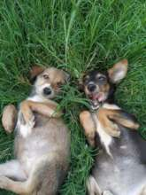 Rescue pups - Dusty and Dawn