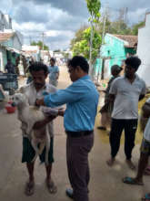 Anti-Rabies Vaccination Drive