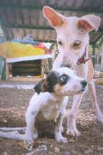 Pogo in conversation with her best friend