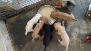 Puppies enjoying their mid-day meal