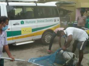 Rabies Vaccination Drive