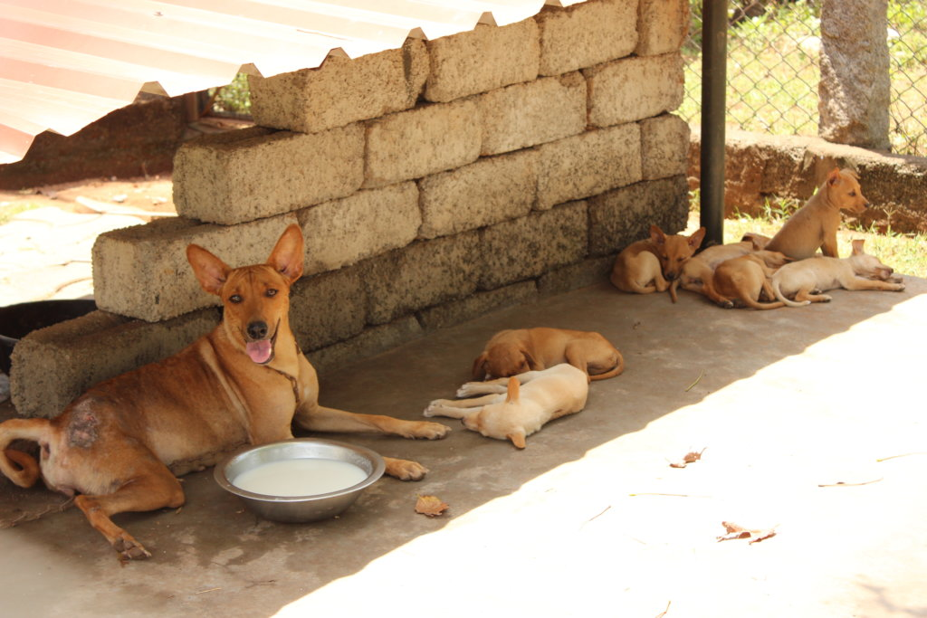 Give second chance for 50 rescue animals in India