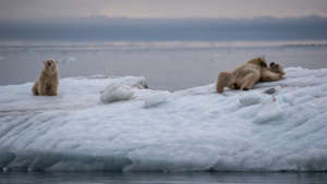 A family of happy polar bears