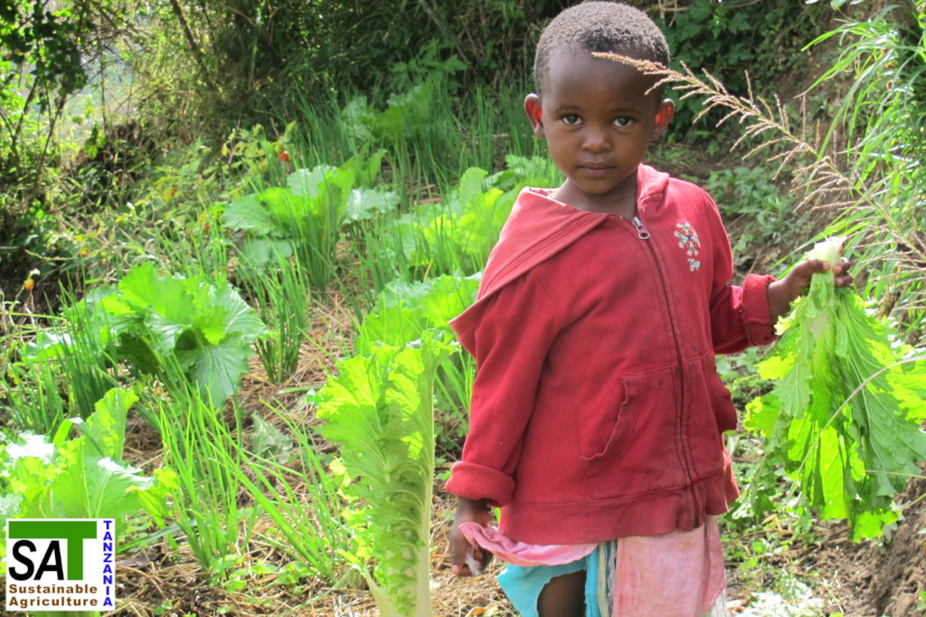 Organic Farming for Small Farmers in Tanzania