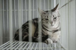 Help CAARE End Shocking Experiments on Cats