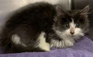 Puff arrives at the shelter needing medical care.