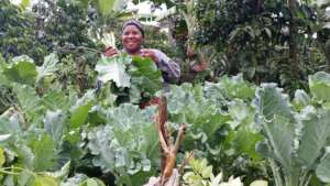 Establish Kitchen gardens for 500 Ugandan families