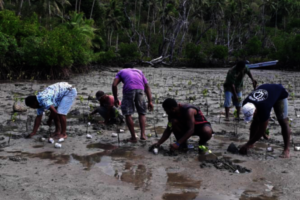 Mangrove planting activity with the locals.