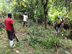 Villagers land preparing for taro.