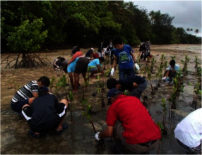 Mangrove planting with the locals.