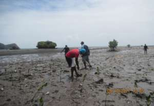 Locals involved in mangrove planting activity.