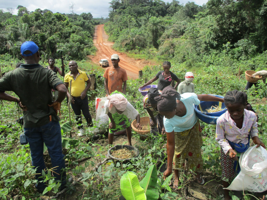 Help Liberian Farmers Save the Rainforest