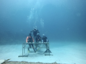 Coral Gardeners in action