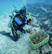 Coral Gardeners
