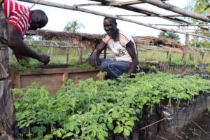 Nursery Workers Tending to Tree Seedlings