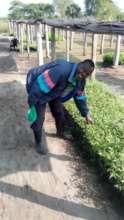 Tree nursery, capacity for 150,000 seedlings