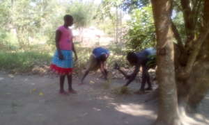 Girls cutting the grass for mixing