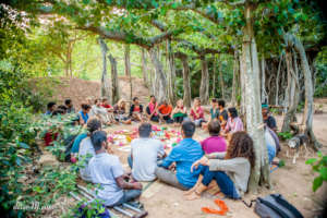 Training in regenerative forestry - international